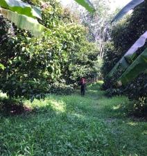 มังคุดจากสวนของเรา